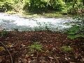 Drini i Bardhe , Radavc.jpg