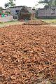 Drying Coir - Manasapota - Simurali 2016-12-18 2167.JPG