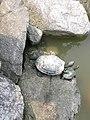 Dscn0710 japan nature.jpg