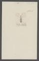 Dupontiella - Print - Iconographia Zoologica - Special Collections University of Amsterdam - UBAINV0274 026 01 0018.tif