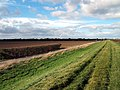 East Marsh - geograph.org.uk - 59972.jpg