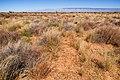 East of the Jarilla Mountains - Flickr - aspidoscelis (4).jpg