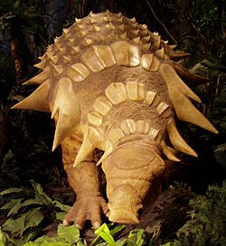 meaning of edmontonia