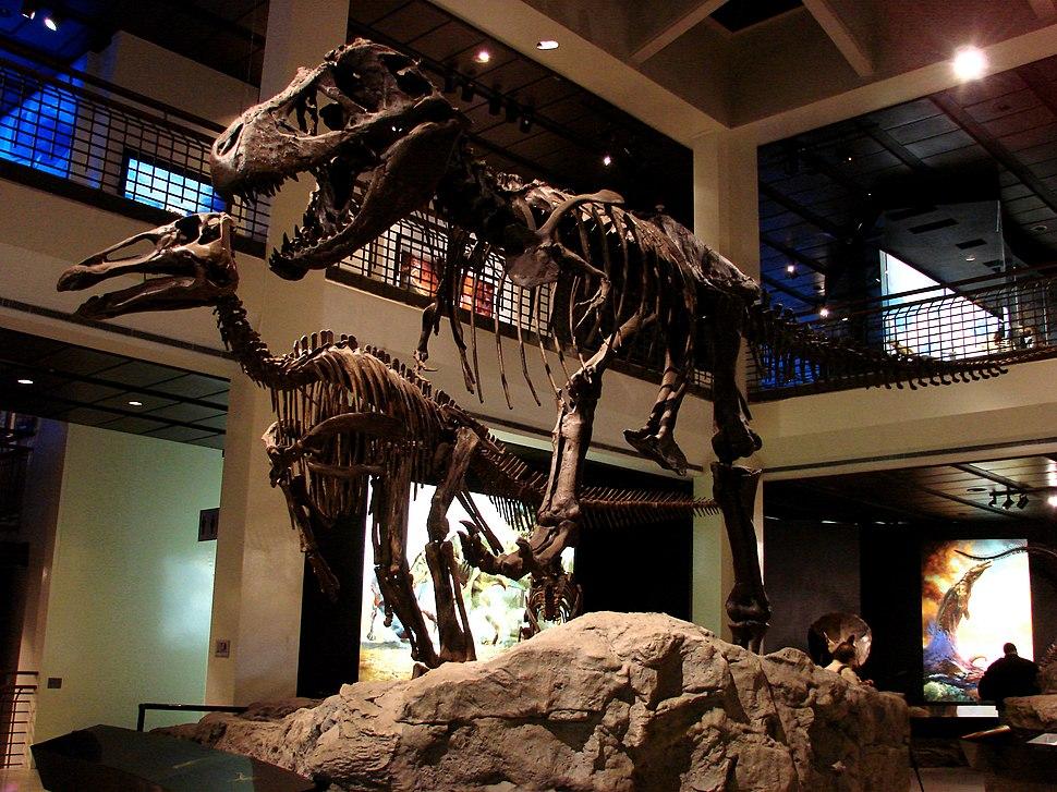 Edmontosaurus & Tyrannosaurus HMNS