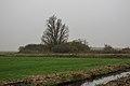 Eenzame wilg (Salix) aan fietspad om Langweerderwielen (Langwarder Wielen). Oostkant 01.jpg