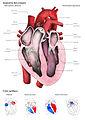 El corazón humano - Laura Macías Álvarez.jpg