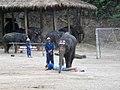 Elephant soccer.jpg