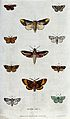 Eleven different moths. Coloured etching by M. Harris. Wellcome V0020648.jpg