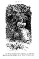 Elisabeth Werner, Vineta (1877), page - 0073.png