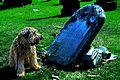 Ella Grave Sitting (14000655874).jpg