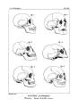 Encyclopédie méthodique - Systeme Anatomique, Pl20.png