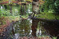 Epping Forest High Beach Essex England - spring pond 02.jpg