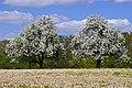 Eppingen 04-2015 - panoramio (2).jpg