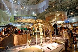 Euhelopus - Reconstructed skeleton in Japan