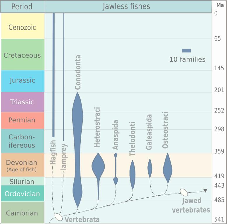 Evolution of jawless fish
