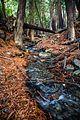 Ewoldsen Trail, Big Sur, California - panoramio.jpg