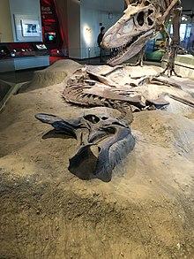 FMNH Lambeosaurus.jpg