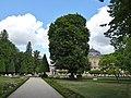 Fagus sylvatica 'Asplenifolia' Hofgarten Würzburg 2019 SSE.jpg