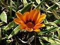 Fale - Giardini Botanici Hanbury in Ventimiglia - 9.jpg