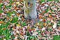 Fallen Leaves-148919.jpg