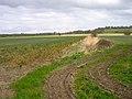 Farmland, Tillingham Valley - geograph.org.uk - 360498.jpg