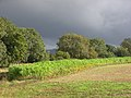 Farmland, near Hungerford - geograph.org.uk - 253147.jpg