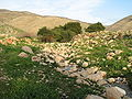 Fatzael Springs and water system 016.JPG
