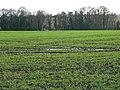 Field and trees, near Hannington - geograph.org.uk - 1130302.jpg