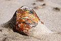 File 055 Muschel im Sand.jpg