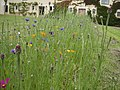 Fleur au manoir de courboyer - panoramio.jpg