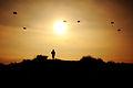 Flickr - Israel Defense Forces - Paratroopers in Training.jpg