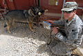 Flickr - The U.S. Army - Military working dog- Capka.jpg