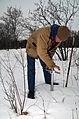 Flickr - USDAgov - Corps conducts snow surveys in Minnesota.jpg