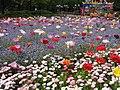 Flori, primavara 2008 - panoramio.jpg