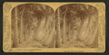Florida, avenue of cocoanut (coconut) palms, by Barker, George, 1844-1894.png