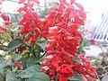 Flower20180527 184813.jpg