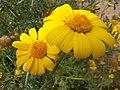 Flower at Montaza Palace garden.JPG
