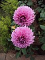 Flowers - Uncategorised Garden plants 105.JPG