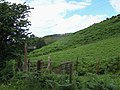 Footpath To Brown Clee Hill - geograph.org.uk - 495254.jpg