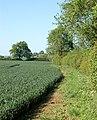 Footpath north from Upper Shuckburgh (2) - geograph.org.uk - 1328869.jpg