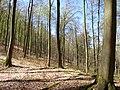 Forêt au printemps.jpg
