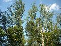 Forêt de Fontainebleau 5 - A P1210813 LV.JPG