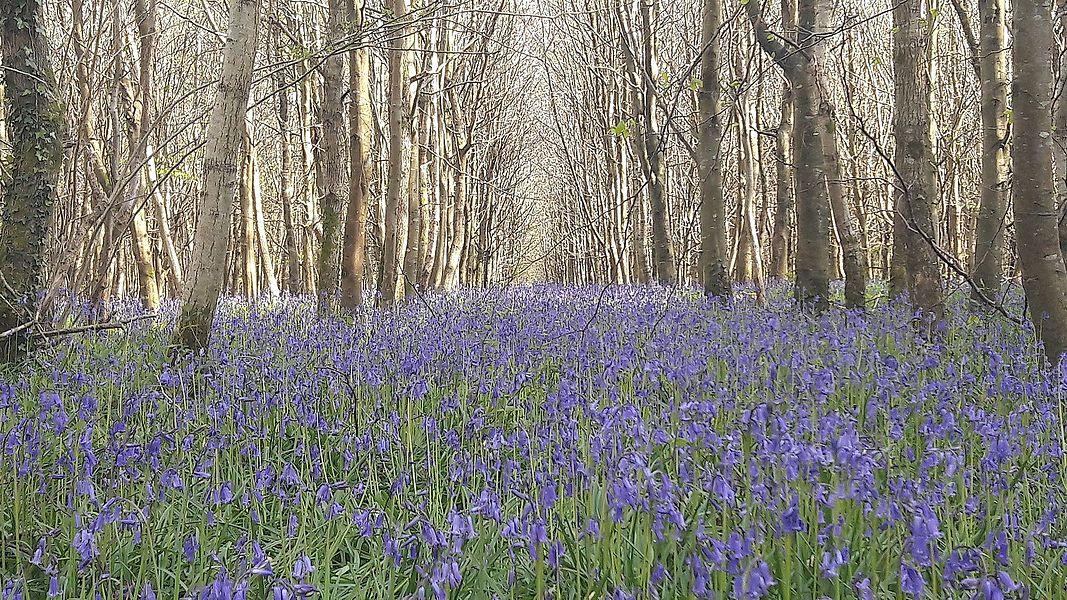 Parc naturel régional des Marais du Cotentin et du Bessin - Forêt de Saint-Sauveur-le-Vicomte