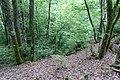 Forest @ Roc de Chère @ Talloires (34804342884).jpg
