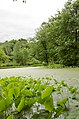 Forest Park, Springfield, MA 01108, USA - panoramio (38).jpg