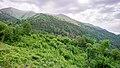 Forest in Belluno.jpg