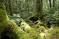 Forest in Yatsugatake 36.jpg