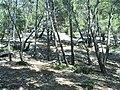 Forest north of Piedra - panoramio.jpg