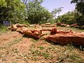Fossil wood at tiruvakkarai.jpg