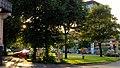 Foto, WO^ Von der Schleswiger Straße mit Blick zwischen den Bäumen und der Sommersonne auf das Rathaus in Flensburg. - panoramio.jpg